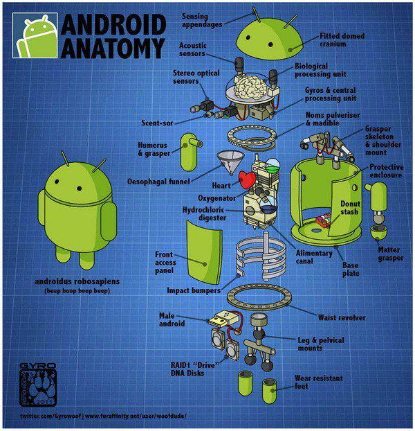 Anatomy of an Android